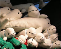 stuffed beluga whales at Vancouver Aquarium